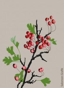 04-Herbst-Rote-Beeren-am-Zweig vor beigem Hintergrund, digitale Zeichnung